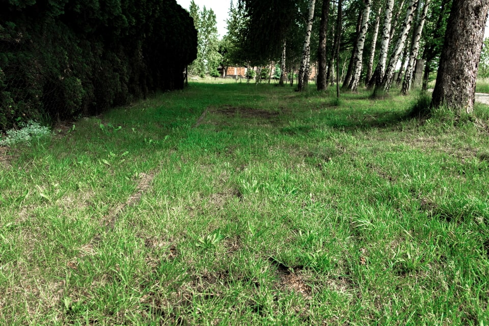 The notorious 'Track of Death' line in Auschwitz extermination camp